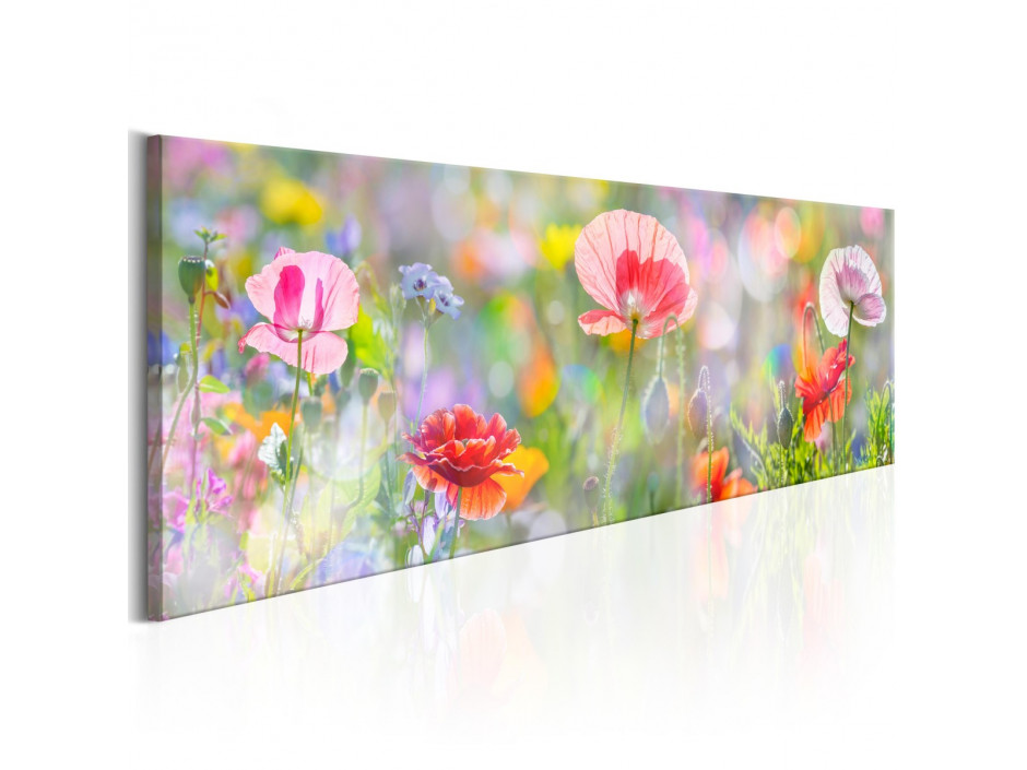 Tableau - Rainbow of Morning Poppies