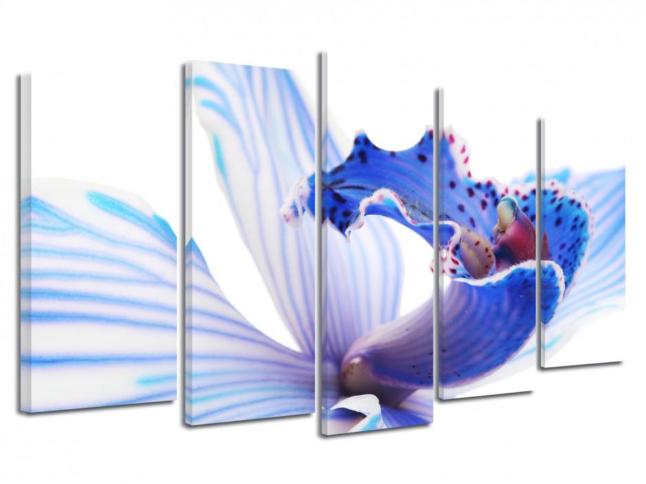 Tableau déco fleurs d'orchidée Bleu